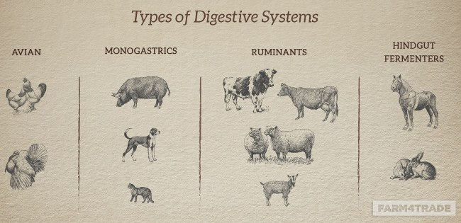 type of digestive systems